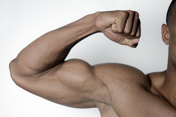男性の腕の筋肉