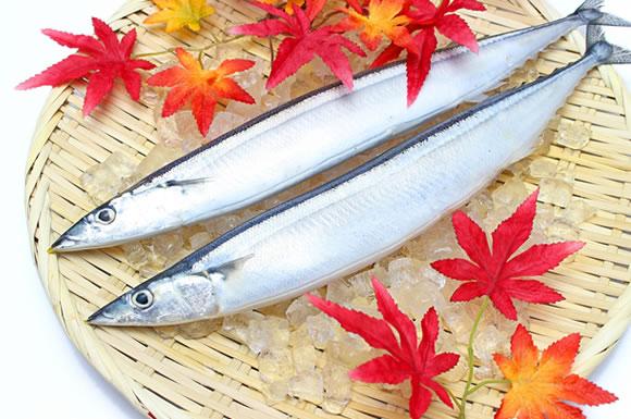 魚は低糖質!よく食べる鮭・まぐろ・かつお・ぶりなどの糖質は?